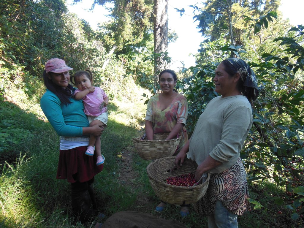 3 generations of women 'picking coffee'