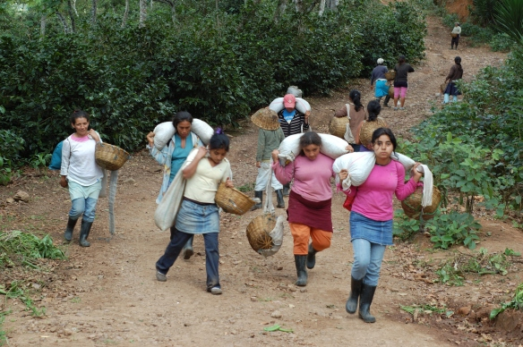 Coffee pickers in Nicaragua returning from the fields with coffee cherries
