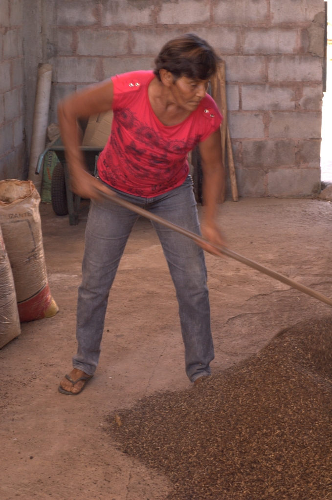 Dona Concepcao drying her coffee